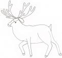 disegno renna da colorare..stambecco da colorare..fattoria didattica in provincia di torino