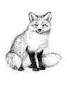 disegno di una volpe a caccia..volpe con cuccioli da colorare..fattoria didattica della regione toscana