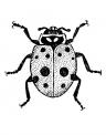 disegno piccola coccinella da colorare..insetti utili da colorare..fattoria didattica della provincia di varese