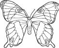 disegno farfalla insetto sul fiore da colorare..fattoria didattica della regione veneto