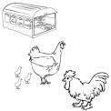 disegno gallo e gallina da colorare..gallo gallina e pulcini da colorare..fattoria didattica della regione emilia romagna