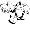 disegno pulcini da colorare..pulcini e uova da colorare..fattoria didattica della regione marche
