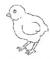 disegno piccolo pulcino da colorare..pulcino esce dall'uovo da colorare..fattoria didattica della regione basilicata