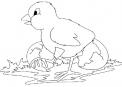 disegno pulcino appena nato dall'uovo da colorare..pulcini e mamma gallina da colorare..pulcinotto da colorare