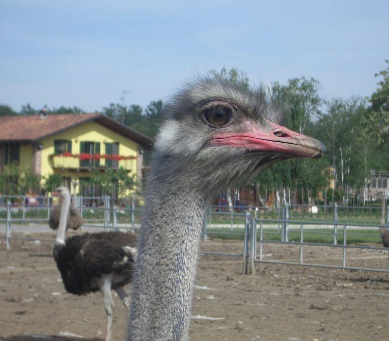 Foto animali della fattoria fattorie didattiche struzzo lo for Grandi planimetrie della fattoria