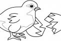 disegno pulcini da colorare..pulcini in fattoria da colorare..fattoria didattica della regione friuli