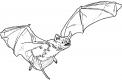 disegno per bambini da colorare di pipistrello..pipistrello mammifero da colorare..fattoria didattica in provincia di novara per bambini