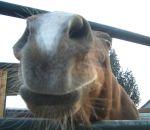 foto animali della fattoria,fattorie didattiche:cavallo-il cavallo è molto curioso,corre veloce e fà alti salti, bere latte fresco appena munto,agriturismi in provincia varese,fattoria didattica,cavallo in fattoria,disegni da colorare