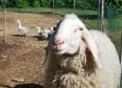 fattoria didatticafattoria didattica con animali