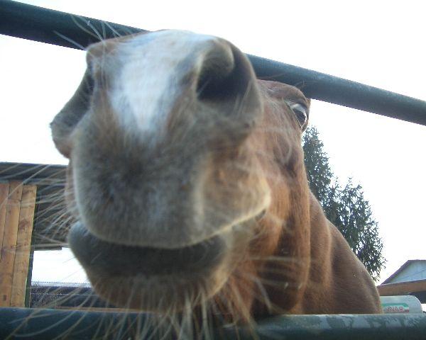 Cavallo in fattoria didattica puledro della fattoria stallone for Disegno cavallo per bambini