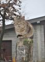 gatto a guardia della fattoria..gatto a caccia di topi..b&b in agriturismo con cani e gatti..gattino beve il latte di mamma micia