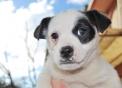 cagnolino della fattoria didattica..cane da caccia ai topi della fattoria..b&b in agriturismo con cani..jack russell in fattoria..immagini cuccioli di cani