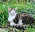 gatto della fattoria..gatto in agriturismo con animali per bambini..fattorie didattiche in lombardia..agriturismo per cani e gatti