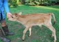distributore latte frescolatte crudo alta qualit