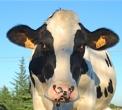 latte fresco a Varese dal distributore di latte