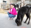 festa in fattoria..sagra della bufala..domenica in fattoria..festa per bambini in fattoria..festa nella fattoria delle bufale..festa in una fattoria con animali