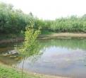 stagno..stagno della fattoria.. stagno con rane..rospi vivono nello stagno..acque stagnanti per anfibi..