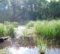 stagno habitat ideale per rane e salamandre..nello stagno vivono girini e rane..canne dello stagno..stagno con ranocchie rospetti e girini..