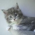 gattinogattino con lunghi baffisimpatico gatti