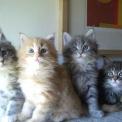 gatti fratelli..gattini appena nati..gatto che beve il latte..gattino sul prato in fattoria didattica
