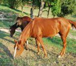 foto cavallo,immagine cavallo puledro stallone fattrice,femmina del cavallo fattrice,maschio del cavallo stallone,piccolo del cavallo puledro,fattorie didattiche scuole in fttoria didattica