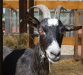 agriturismo la vigna..agriturismo in provincia di como..fattoria didattica in provincia di como..agriturismo con animali vicino a milano