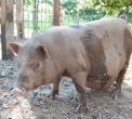 animali dell'agriturismo la vigna...fattoria con animali in agriturismo in provincia di como..didattica in fattoria a milano..