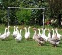 fattoria didattica e agriturismo in provincia di como...fattoria didattica con giochi per bambini..fattoria didattica in regione lombardia..