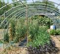 orto didattico in fattoria didattica la vigna a lomazzo..percorso didattico sulle piante aromatiche in fattoria didattica la vigna in provincia di como..