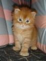 gattino..immagine di gattino..gatto in fattoria..gatto a caccia di topi..micio nella fattoria..micetto beve il latte da mamma micia..