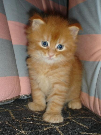Fattoria didattica con gatti gattini in agriturismo gatto for Piani di fattoria con foto