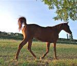foto cavallo,immagine cavallo stallone,la fattrice allatta il puledro,cavallo arabo,scuole in fattoria didattica fattoria aperta a tutti i bambini