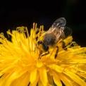 il mondo delle api di luca mazzocchibambini in