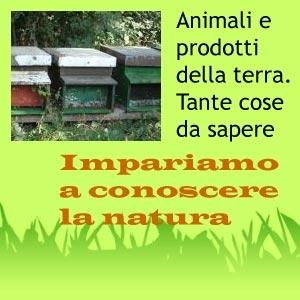 SCHEDE DIDATTICHE sugli animali della fattoria