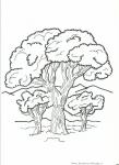 albero da colorare,pianta da colorare,pianta con foglie da colorare,albero monumentale,foglia