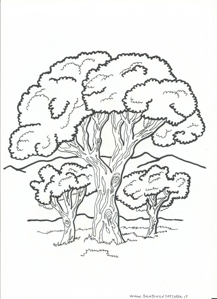 alberipiantefoglie da colorare per bambini