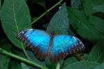 insetto in fattoria,farfalla adulta immagine,foto di farfalla colorata