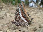 immagine di farfalla colorata,farfallina della fattoria,fattoria didattica con farfalle