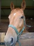 cavallo nel box del maneggio della fattoria,maneggio con cavalli in fattoria,educazione ambientale per bambini con cavalli