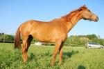 fattoria didattica con cavalli,fattoria didattica con pony per bambini,agriturismo con cavalli,agriturismo per bambini con animali