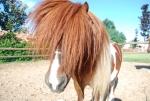 pony in fattoria,puledro pony,fattoria con cavalli,fattoria con pony,fattoria percorso didattico sui cavalli