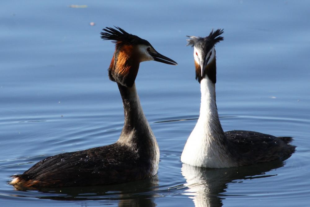 Uccelli migratori migrazione degli uccelli uccelli in for Fattoria immagini da colorare