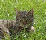 foto animali della fattoria,fattorie didattiche:gatto-camilla la gattina fà le fusa, dovremmo bere del buon latte fresco appena munto,agriturismi in provincia di varese,fattoria animali