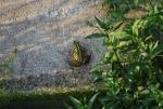 rana verde immagine,eventi natura,rane nello stagno,rane nel canale,agriturismo ranocchia,ranocchie in acqua