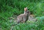 foto mini lepre,mini lepre nel prato della fattoria,mini lepre immagine,fattoria didattica con lepri e conigli,tana di minilepre