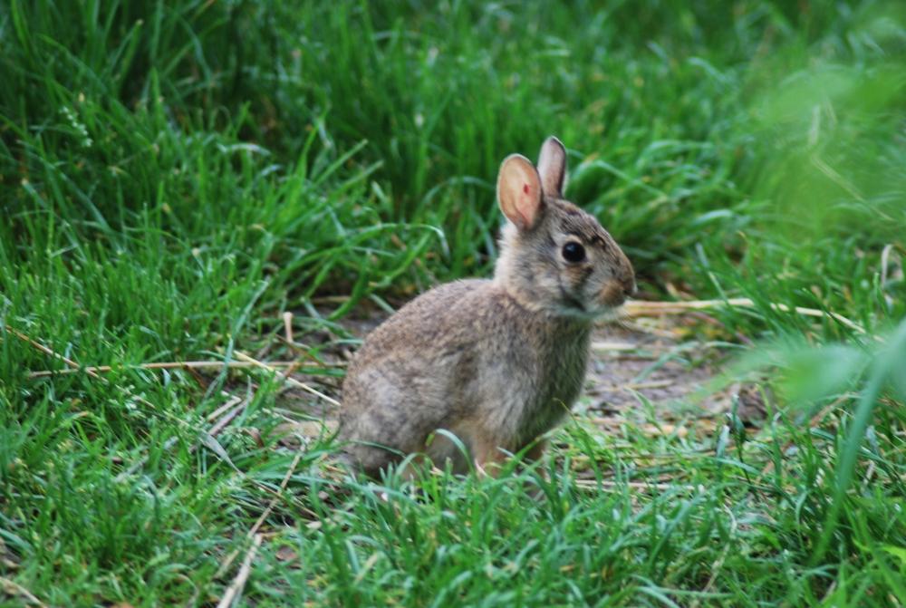 Coniglio in fattoria didattica tartaruga in fattoria didattica for Coniglio disegno per bambini