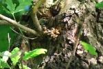 nido di api su albero,api all'interno di un albero,nido di api dentro una pianta