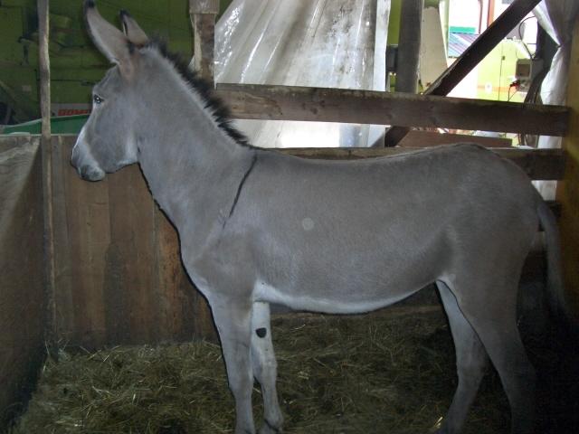 Mulo in fattoria didattica bardotto in fattoria didattica for Asino e cavalla