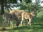 mulo in fattoria didattica,bardotto in fattoria didattica,educazione ambientale biodiversita in fattoria