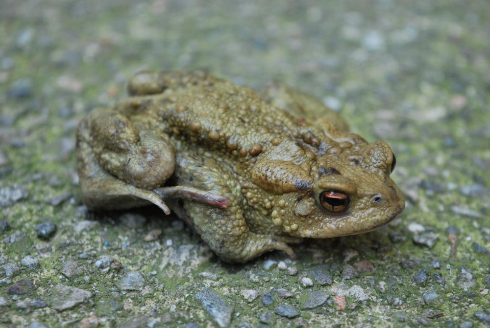 Animali di palude animali dello stagno biodiversit stagno for Animali laghetto